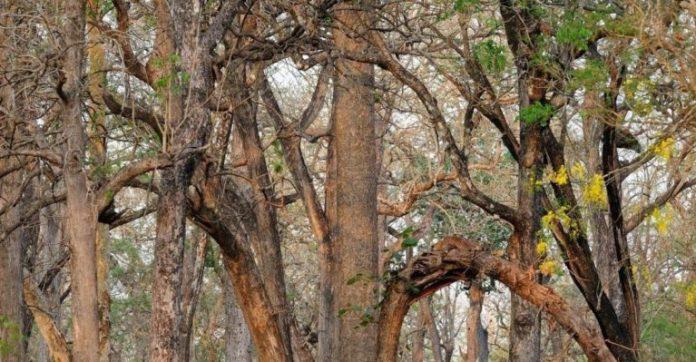 На фотографії сховався леопард, але побачити його за 10 секунд може не кожен!