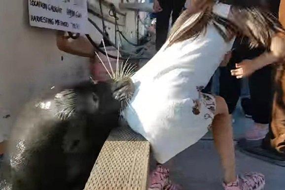 Морський лев вкусив та затягнув на дно дівчинку: моторошне відео
