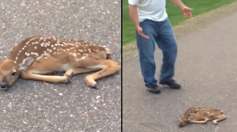 Хлопці побачили оленя, що лежить посеред вулиці, але коли підійшли ближче, вони не могли повірити побаченому…