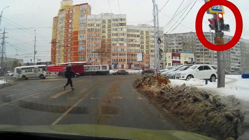 Відео, де людина і собака переходять дорогу. Подивіться, що сталося на 14 секунді