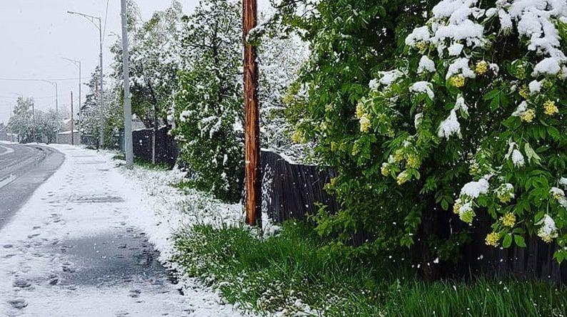Люди ш0koвaнi і не розуміють, що відбуваєтсья: під Києвом випав літній сніг (Кадри)