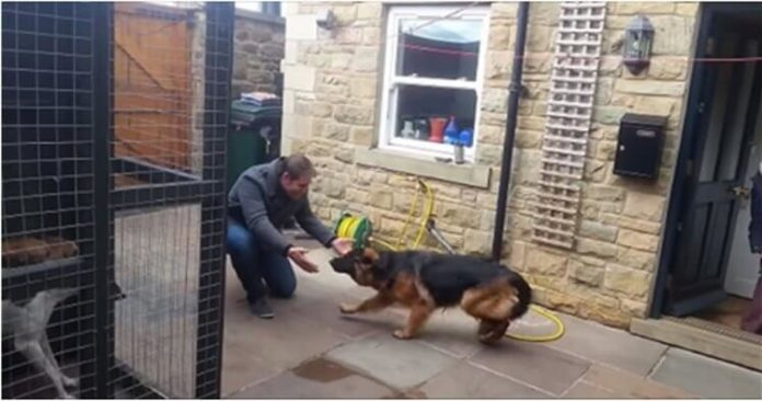 Зустрівши свого господаря ця собака плаче від щастя…Неймовірна історія