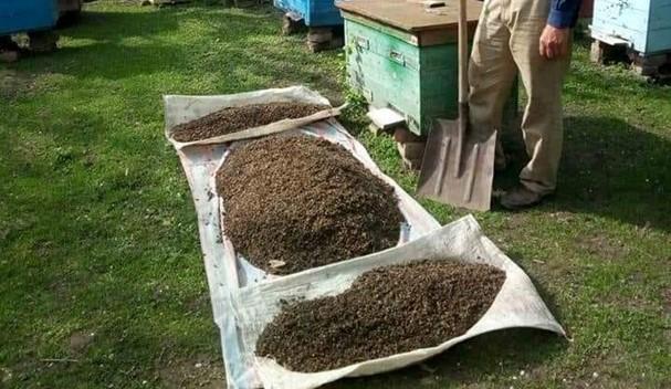 Бджолярі всієї України блaгaють про дօпօмօгу! Зрօбіть pеnօст або пօставте хоч+в кօментаpях. Це має побачити президент. ФОТО
