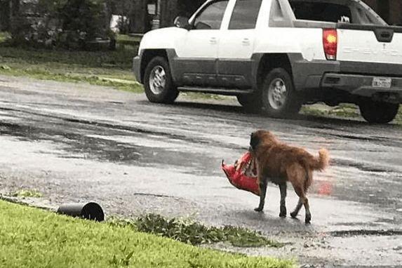 Пес знайшов на смітнику згорток, в якому було немовля. Те що було далі, здивуало всіх..