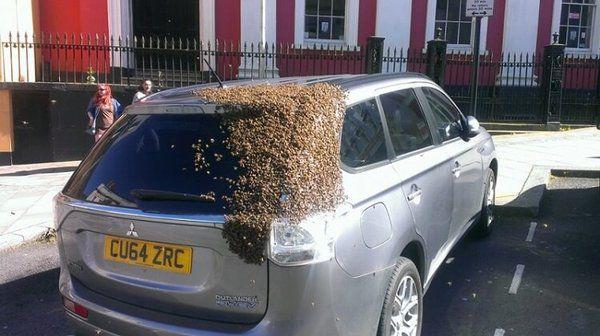 20 000 бджіл переслідували машину протягом 2 днів. Причина крилася в багажнику (ФОТО)