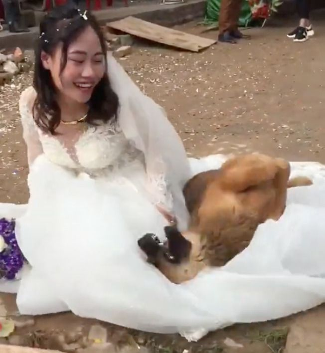 Собака не пускає свою господиню виходити заміж! Подивіться, що вона для цього зробила