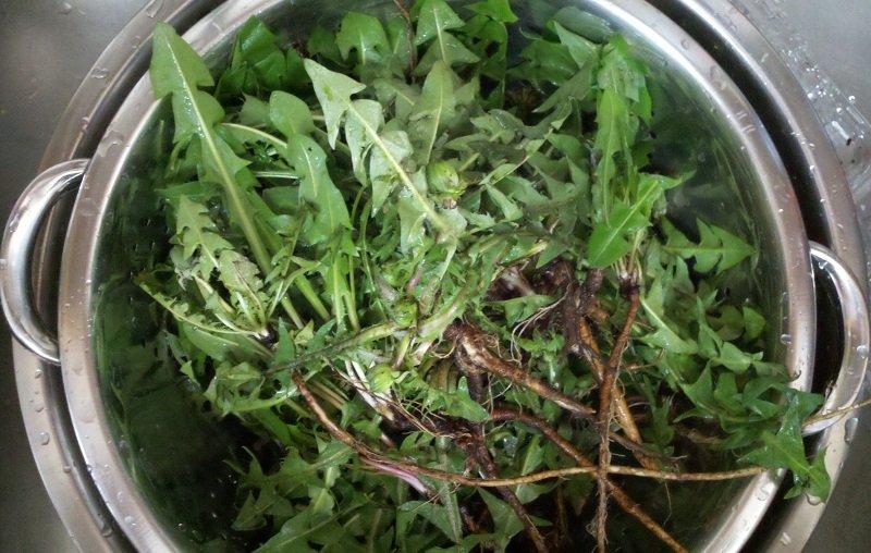 Всього 1 листок може врятувати і полегшити стан! Зростає практично скрізь, але мало хто знає, як його застосовувати ..