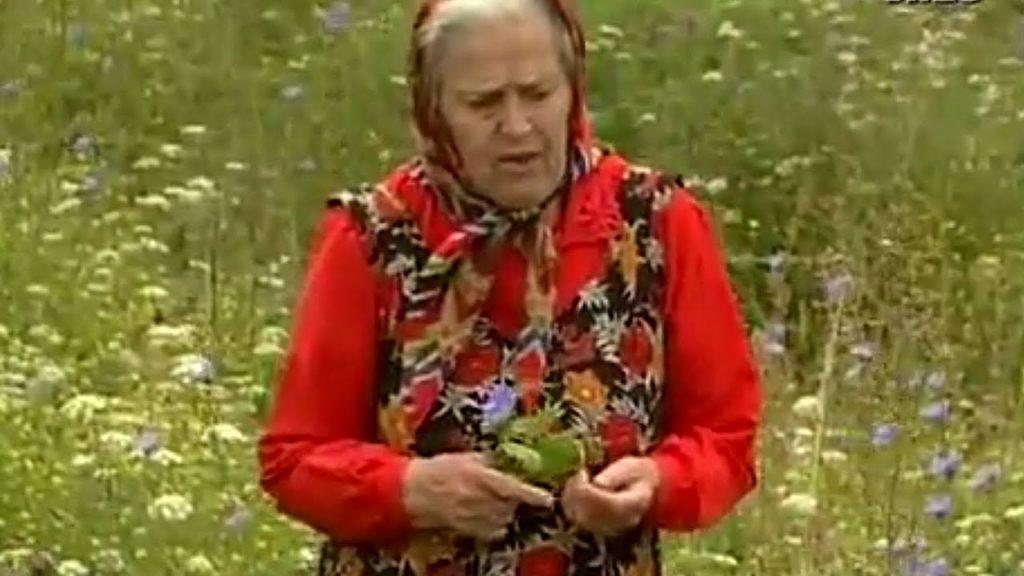 Монастирська травниця: не хочете хворіти — накопайте собі три кореня — лопуха, пирію і кульбаби