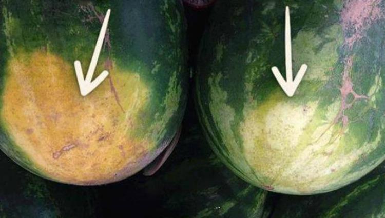 Запамятайте собі!!! Щоб вибрати смачний кавун, не потрібно по ньому стукати: 4 підказки від фермера