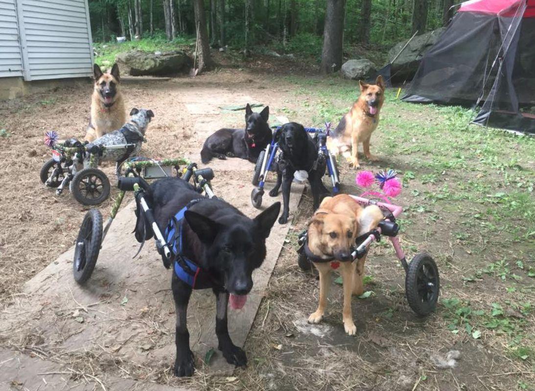 Шестеро собак-інв@лідів отримали шанс на щасливе життя завдяки жінці з величезним серцем