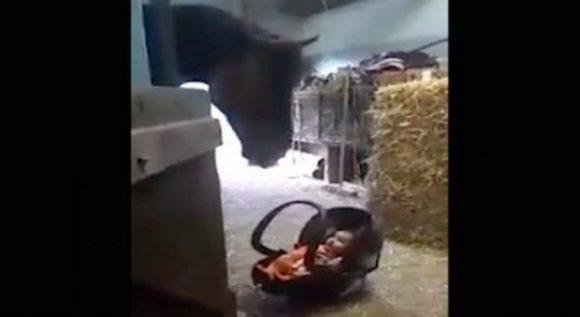Молода матуся лишень на хвилинку залишила своє дитятко поряд з конем. На те що відбувалось далі варто подивитись відео