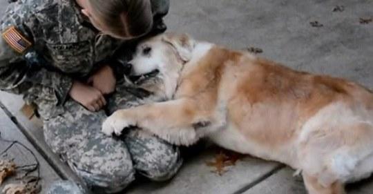 Собака не може перестати плакати, коли бачить свою господиню після трьох місяців розлукu