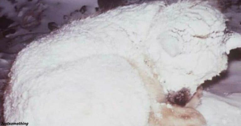 Kуди краще людей..Собака два дні вкривала тілом 2-річну дитину, щоб врятувати її від морозів