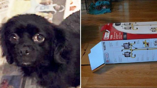 Водій побачив, як собака дряпає закриту коробку на узбіччі і «плаче»