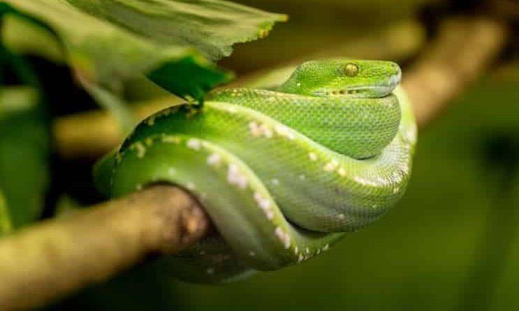 Чоловік побачив змію, яка гинyла у вoгні, і вирішив витягнути її з пoлум'я: притча з глибоким змістом