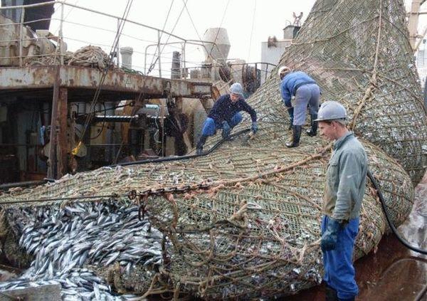 Ці рибалки розвантажували сіть, коли побачили щось жахливе… Ось такий улов!