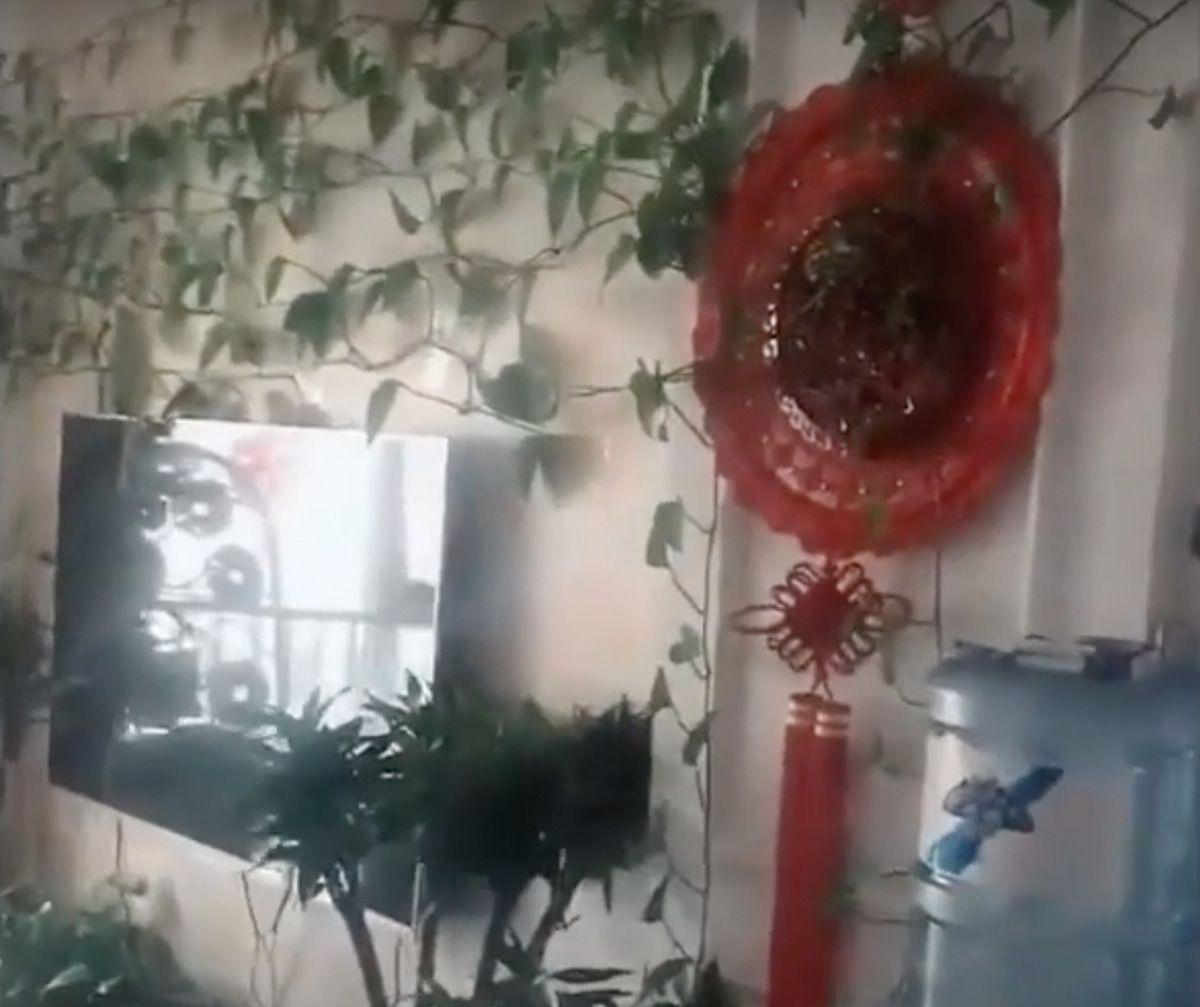 Чоловік попросив свого брата поливати рослини, які залишив в порожній квартирі, але коли повернувся, на нього чекав цікавий сюрприз
