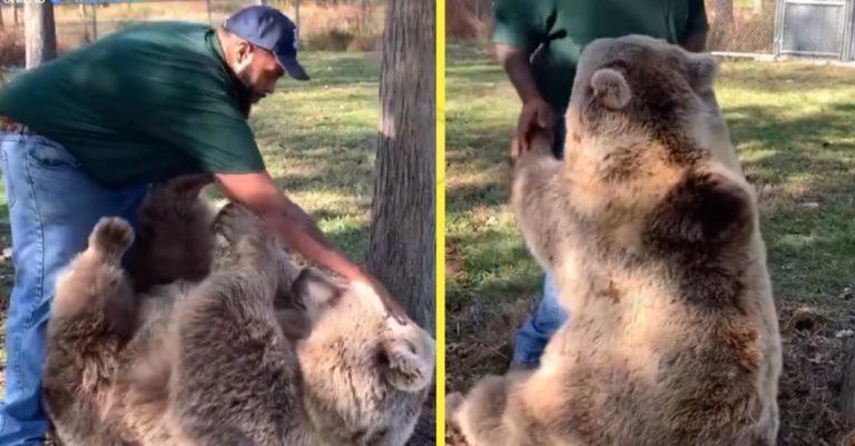 Чоловік прийшов у гості до осиротілої ведмедиці, яку він вигодував.Відео
