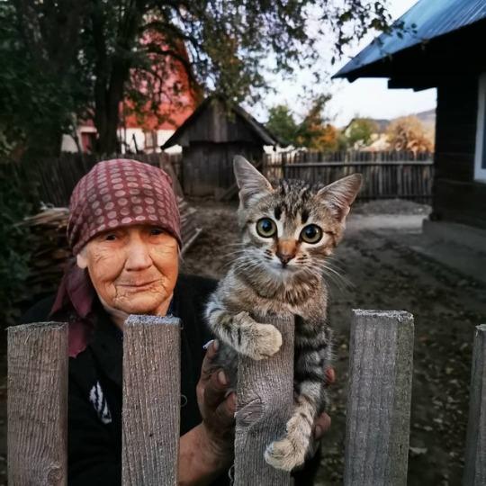 Бабуся підібрала мале беззахисне кошеня з вулиці. Хіба ж знала старенька, що станеться через декілька років