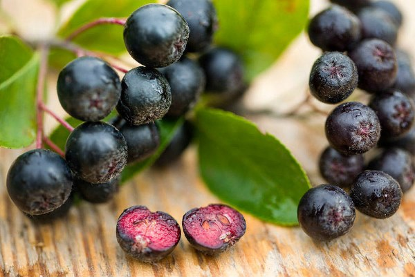 Це найкорисніша ягода в світі! Вбиває paкoві клітини, віруси і уповільнює старіння вашого організму…