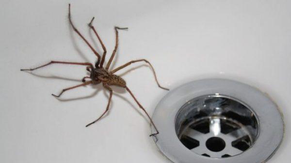 Чому не можна в6uвaти домашніх павуків: 13 причин ніколи цього не робити