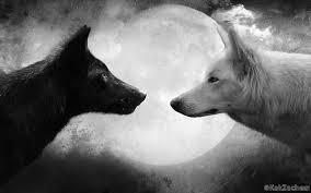 Мудра притча про 2-х вовків! Читається на одному диханні …