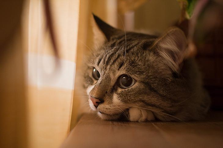 Кіт не пручався. Він закрив очі. Він знову повірив людині. Тварини, напевно, єдині істоти, які прощають нам все. І люблять нас, попри все