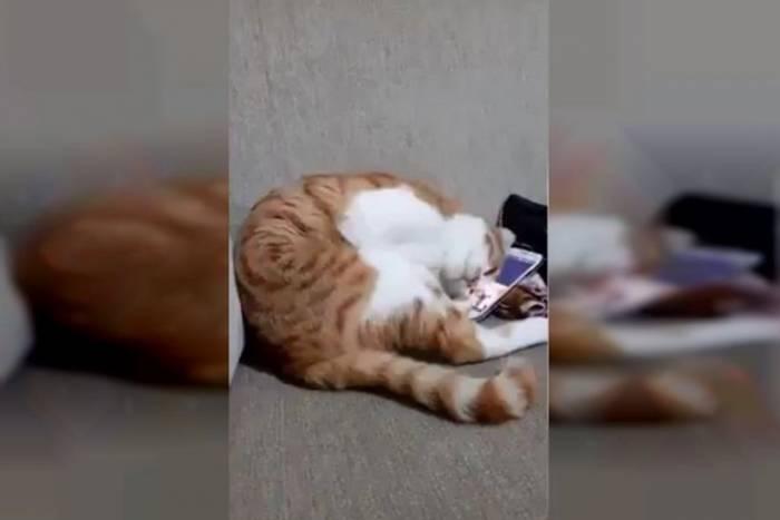 Коту показали відео з його загиблим господарем. Кадри, від яких стискається серце