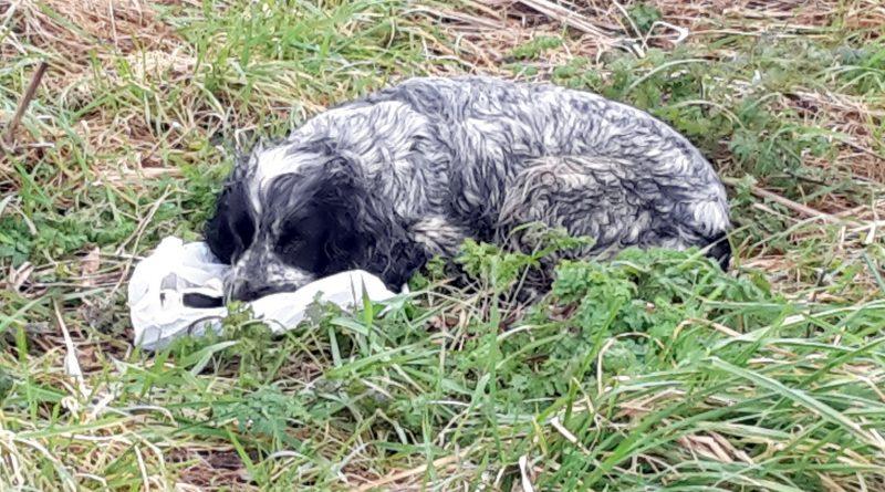 Він знайшов у канаві кинуту собаку з пакетом в зубах