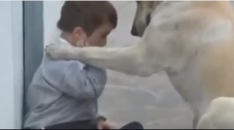 Лабрадор зустрів дитину з синдромом дауна і вразив всіх своєю реакцією (відео)