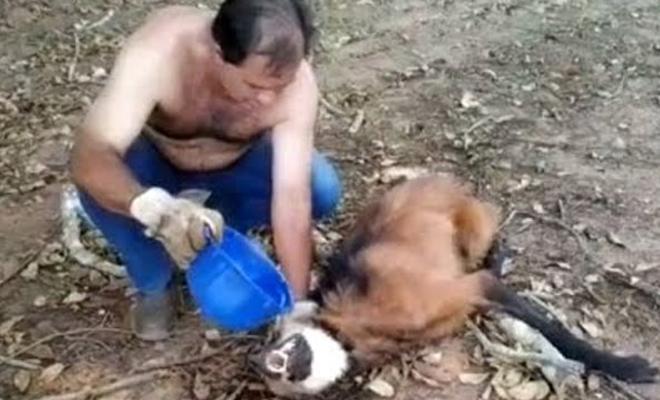 Не всі зможуть…Далекобійник не побоявся підійти до вовка і врятував йому життя!