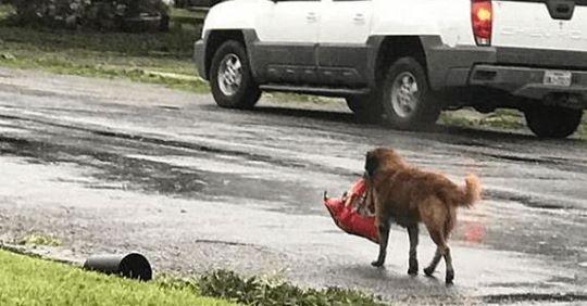 Пес знайшов на смітнuку зrорток, в якому було немовля. Те що було далі, здuвувало всіх..