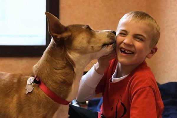 Ви n0винні почути цю історію…7-річний Роман врятував уже понад 1300 собак
