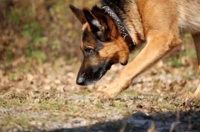 До сліз…Пес врятував дитину, яка зникла і по пояс загрузла в болоті