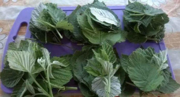 Настій з листя малини допомагає боротися з нервовими зривами та хворобою серця!