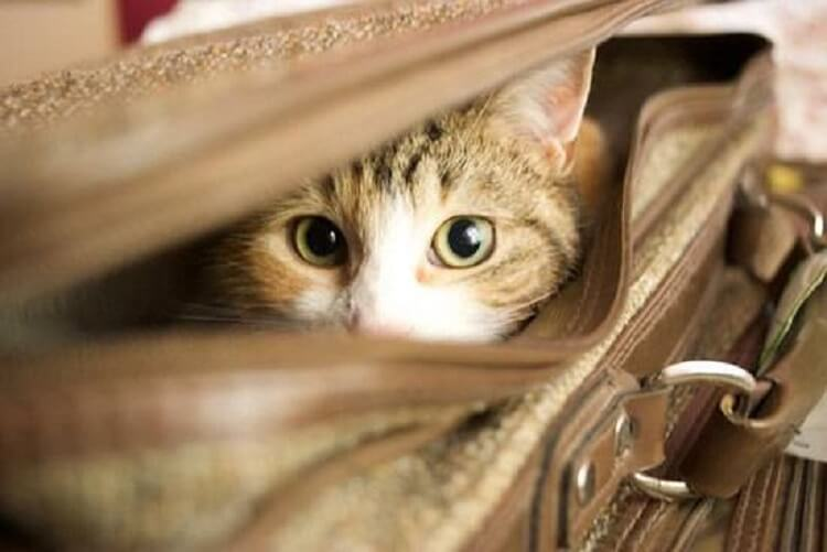 Кішка не пускала мене в автобус, ніби щось відчула! Через декілька хвилин сталося щось страшне!!
