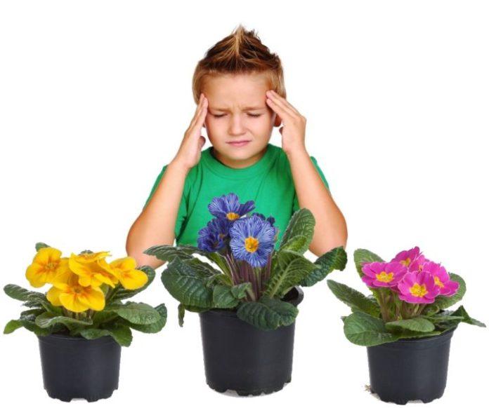 Терміново приберіть їх з оселі! Кімнатні рослини, які викликають головні болі!