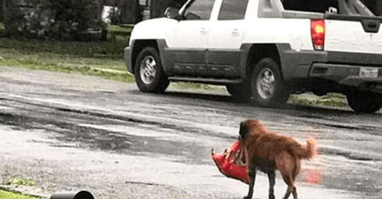 Бездомна собака несла в зубах невеличкий пакунок. В той день їй вдалося врятувати одне маленьке життя