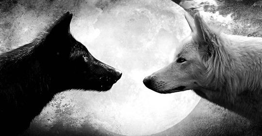 Мудра притча про двох вовків. Читається за 30 секунд, а запам'ятовується на все життя!