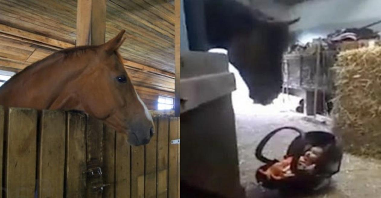 Мама лише на секунду залишила свого малюка в стайні. Те, що зробив кінь коли дитина розплакалася – варто бачити