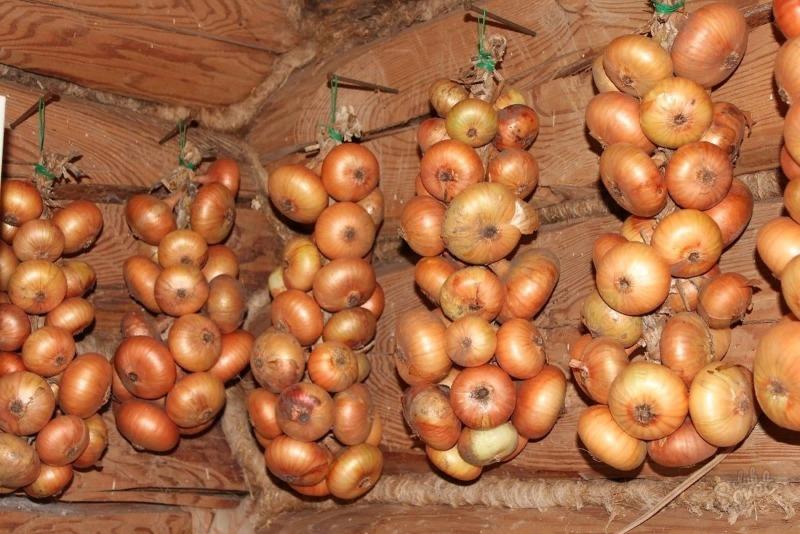 Чотири секрети вирощування рекордного урожаю цибулі