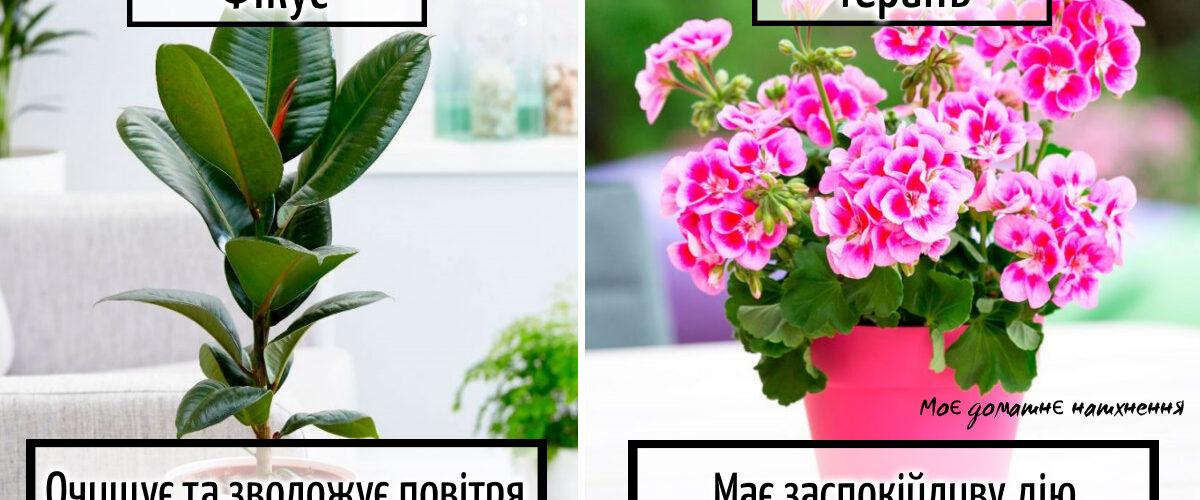 Чемпіони по оздоровленню: 4 кімнатні рослини, які повинні бути у кожній квартирі