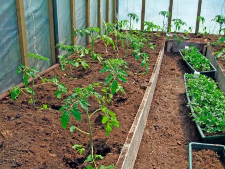 Після того, як я почала підгодовувати свою розсаду цими сумішами, мій урожай щороку стає все кращим! Господиньки Зберігайте собі