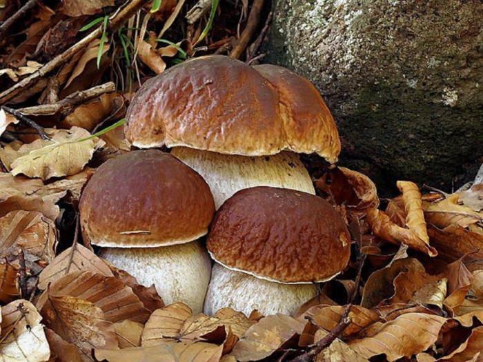 ВАРТО ЗНАТИ: Прості правила заморожування та зберігання грибів