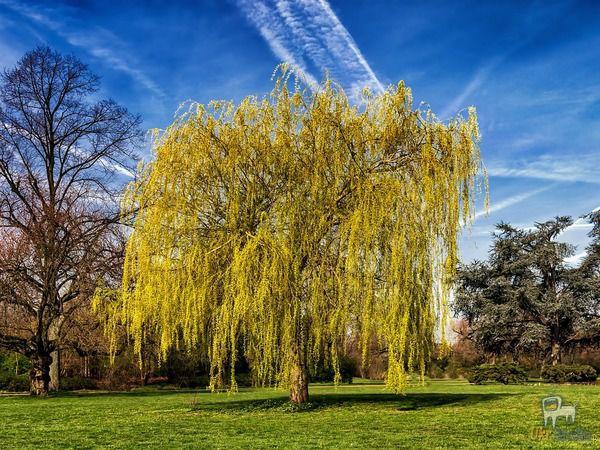 Запам'ятайте Ці 5 Дерев, Які Категорично Не Можна Садити Біля Хати